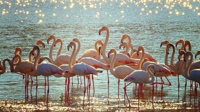 flamingo peace