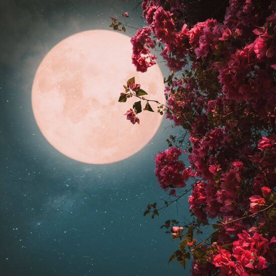 Flower Super Moon