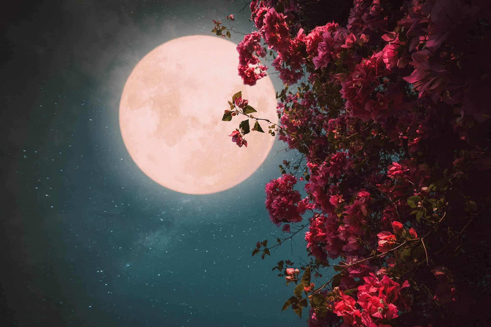 Flower Super Moon